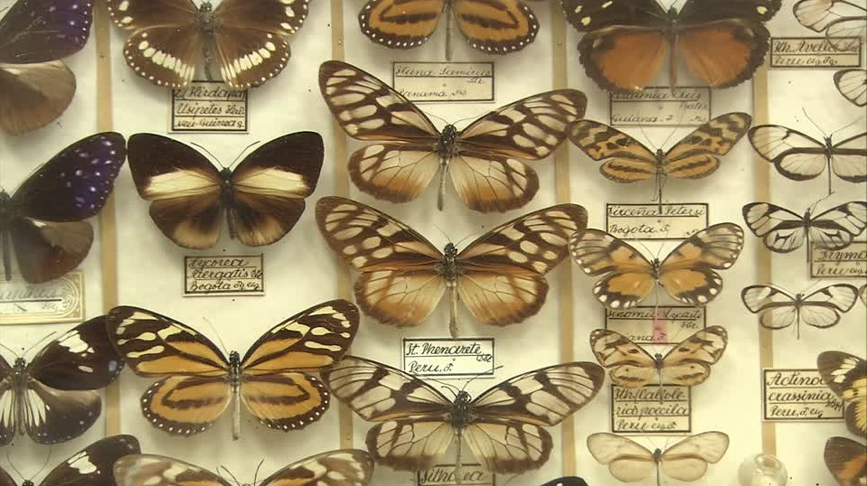 "Research data: ""recorded factual material"" (Butterfly collection at the Nature-Historical Museum, Admont)"